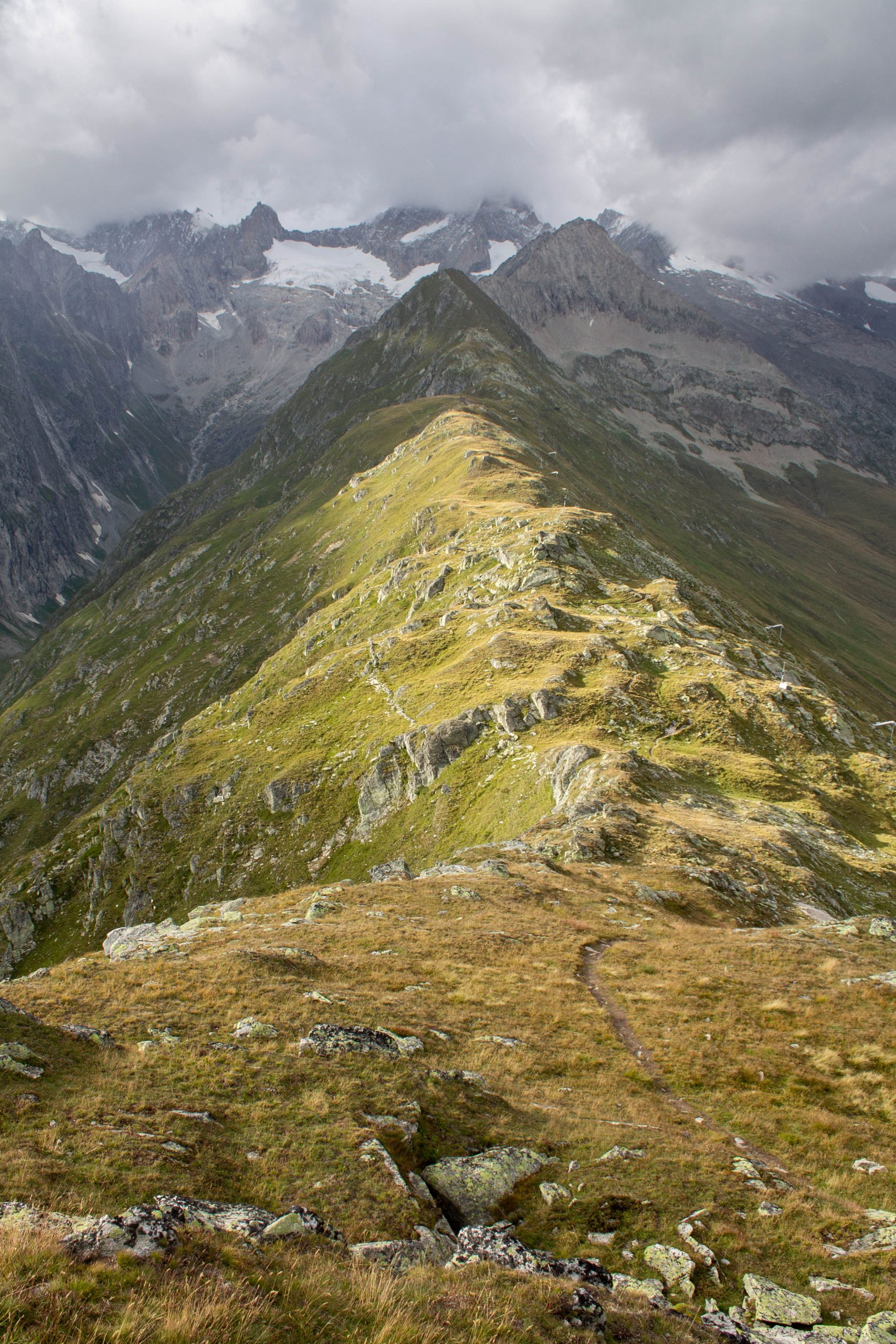 foggenhorn-wallis